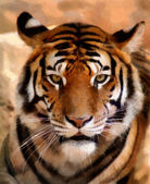 Tiger Face Portrait Painting — Stock Photo