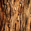 Tree Bark Background - Stock Photo