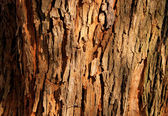 Tree Bark Background — Stock Photo