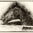 Large Brown Pony at Gate Sepia Drawing — Stock Photo