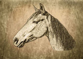 Retrato de caballo tonos sepia — Foto de Stock