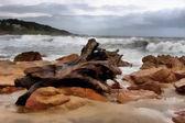 Malowanie dużych pnia drewna na plaży burzliwy — Zdjęcie stockowe