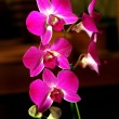Colorful Orchid Species — Stock Photo #36438173