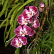 Colorful Orchid Species — Stock Photo #36442583