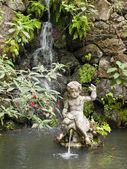 Tropikalny ogród — Zdjęcie stockowe