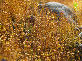 Alpine vegetation — Stock Photo