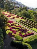 Botanische tuin — Stockfoto