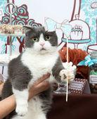 Funny cat holiday birthday party — Stock Photo