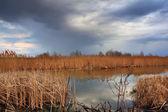 Primavera no pântano — Fotografia Stock