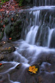 Autumn waterfall with maple leaf — Stock Photo