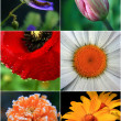 Stock Photo: Collage of flowers