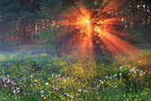 The first rays of the rising sun — Stock Photo