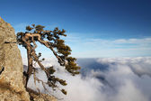 Tree on the cliff in moutain — Stock Photo