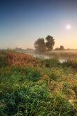Summer sunrise on the river — Stock Photo
