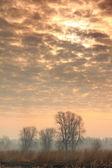 Cielo di alba sotto gli alberi — Foto Stock