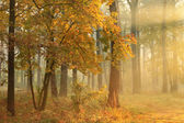 Autumn misty forest — 图库照片