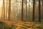 Autumn misty forest — Stockfoto