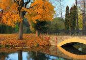 Autumn in the japanise park — Stock Photo