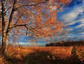 Autumn forest on the sunset — Stock Photo