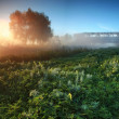 Misty sunrise on the river — Stock Photo