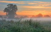 Misty dawn autumn morning — Stock Photo