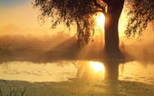 Sunbeams in misty morning on the river — Stock Photo