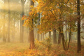 Autumn misty forest — Stock fotografie