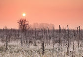 осенний рассвет на зафиксированному полю — Стоковое фото