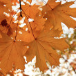 Stock Photo: Beautiful Fall foliage