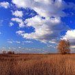 Blue sky with clouds above a lone tree in a field — Stock Photo