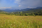 Field of flowers in summer mountains — Stock Photo