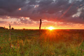 Sunset over the field — Stock Photo