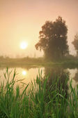 Misty sunset on the river — Stock Photo
