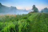Misty dawn in spring — Stock Photo