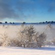 Misty winter forest in the mountain — Stock Photo