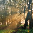 Misty dawn in the forest — Stock Photo