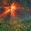 Misty dawn in the forest with the rising sun — Stock Photo