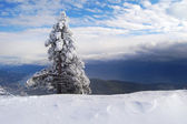 Snow-covered trees on a cliff in the mountains — Stock Photo