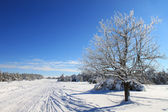 Snow-covered trees near the road — Stock Photo