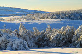 Snowy morning in the winter valley — Stockfoto