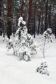 Invierno cubierto de nieve en las estribaciones de los alpes — Foto de Stock