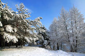 Snow-covered trees in the forest — Stock Photo