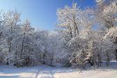 アルプスの麓で雪の冬 — ストック写真
