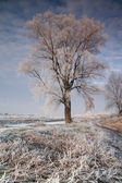 Tree in rime on sunset — Stock Photo
