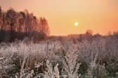 Winter sunrise in the forest — Stock Photo