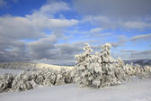 Winter forest in the mountain — Stockfoto