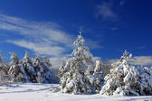 Snow-covered forest in the winter montains — Stock Photo