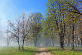 Misty alley in spring morning — Stock Photo