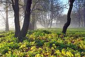 雾霭的清晨,在森林的边缘 — 图库照片