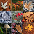 Collage of autumn leaves and mushrooms — Stock Photo